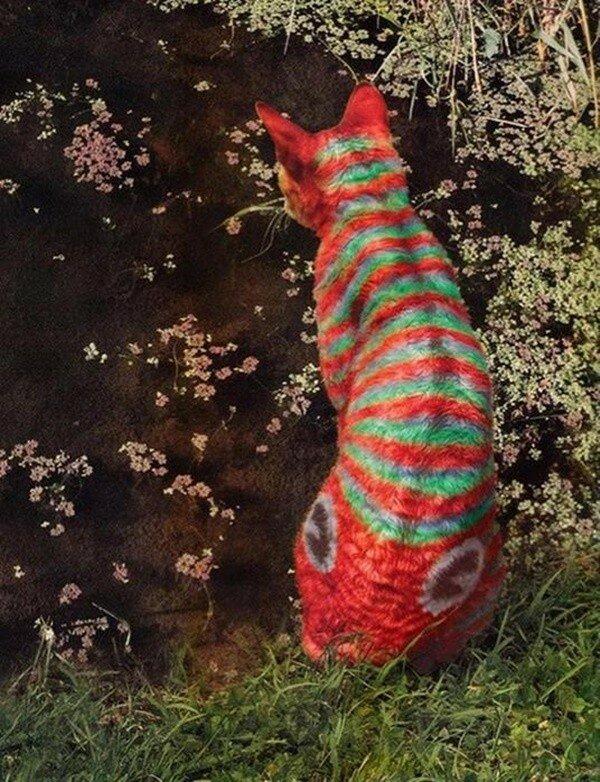 Что такое кэтпейнтинг? Искусство раскрашивания или издевательство над животными?