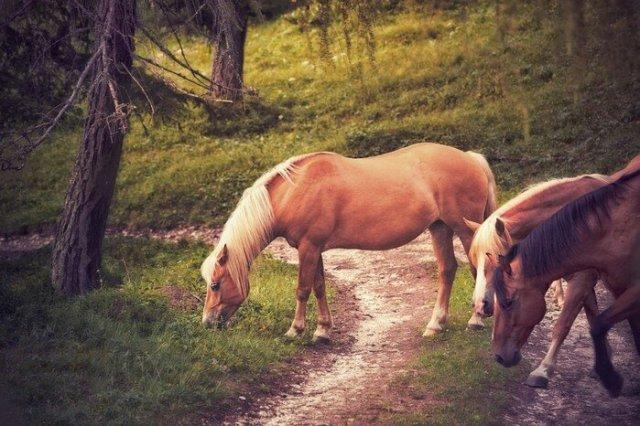 Фликр: пейзажи, животные, люди, предметы...