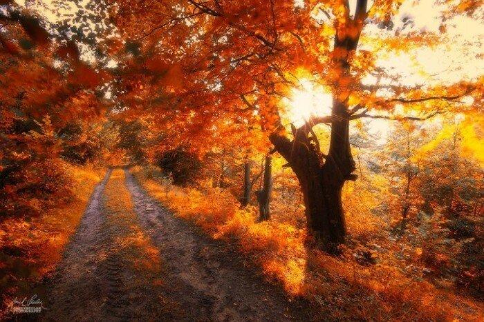 Идти по дороге с теплыми мыслями