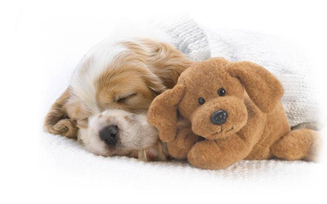 Позитивные фотографии спящих щенков