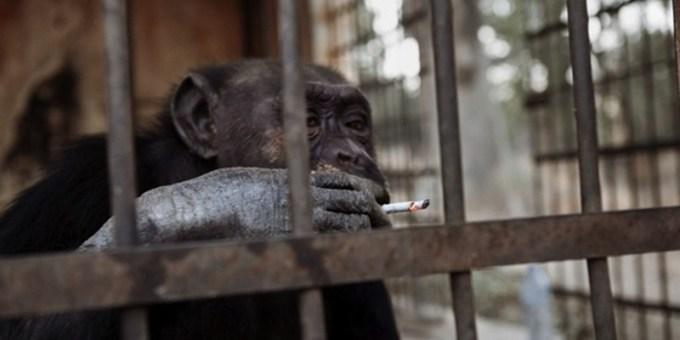 10 невероятных историй о животных преступниках