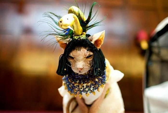Кошачий показ мод на Манхэттене: фотографии