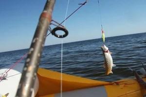 На дорожку попалась вкусная рыбка! ))