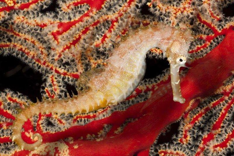 Жизнь в океане: подводные фотографии Дэвида Флитема