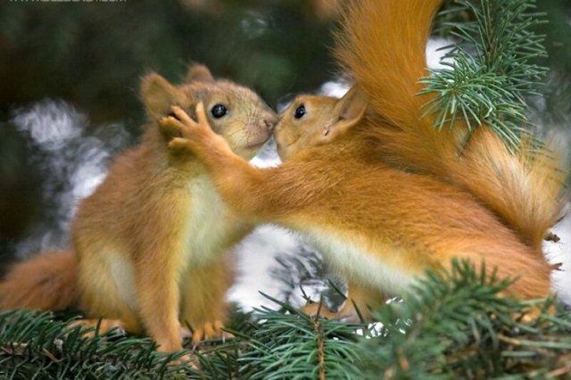 Зверская любовь: животные тоже делают это
