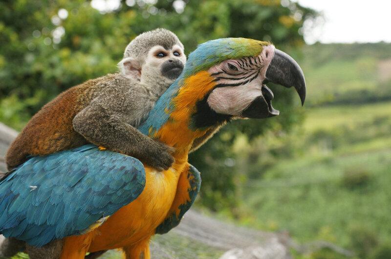 Фотографии животных, решивших оседлать своих собратьев