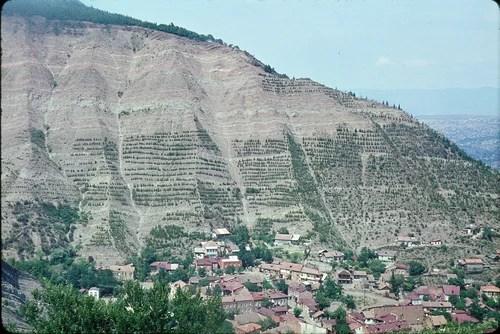 Тбилиси. Лесовосстановление на склонах горы Св. Давида