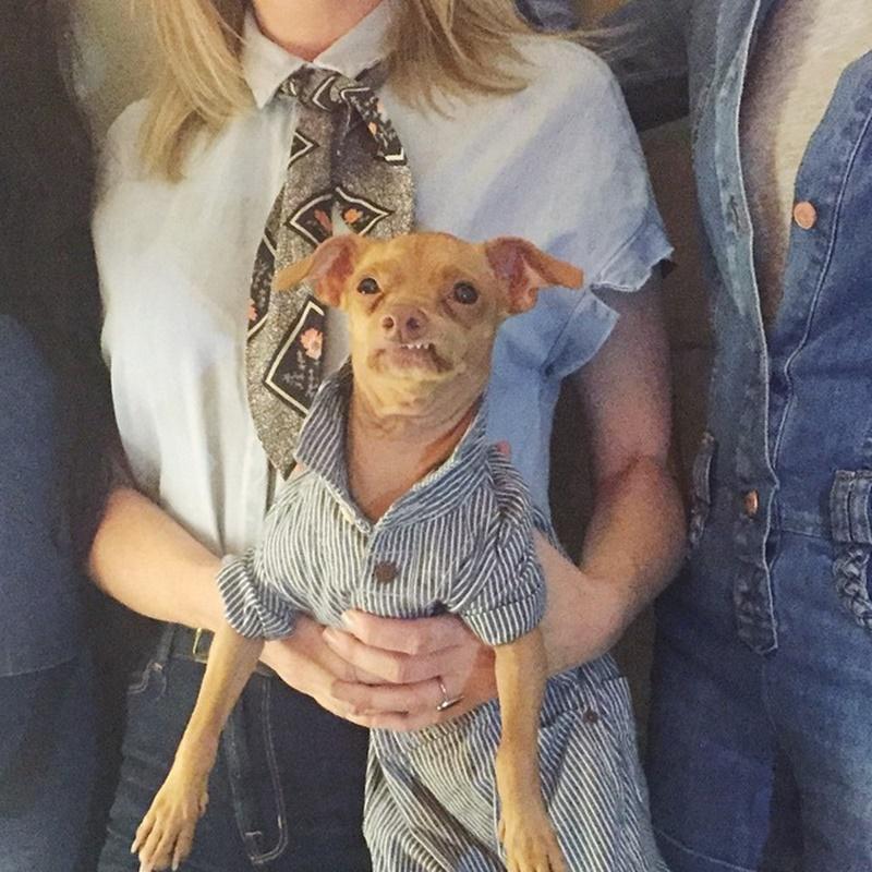 Как уродливая собака сделала свою хозяйку богатой