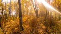 городской, земли, картинки, красив, красивые, лесной, лесные, обои, осенний, осень, пейзаж, пейзажа, пейзажи, поэтапно, презентация, природы, родной, роль, русский, тема, фото