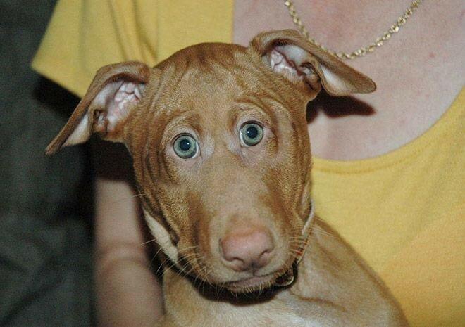Если бы глаза животных были расположены как у людей