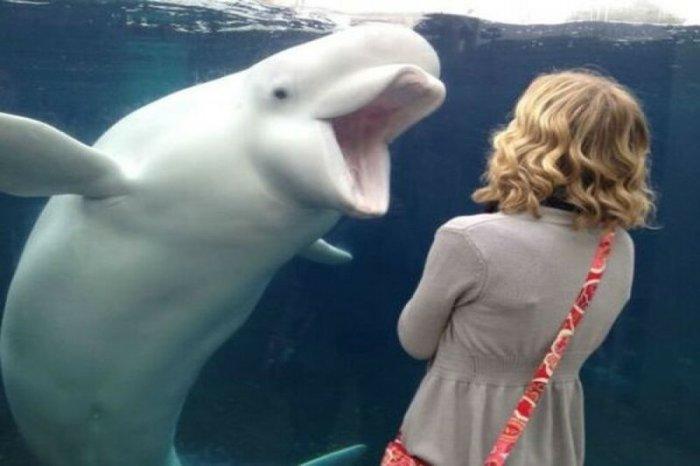 Объясните мне китов: советы диетолога, которые вам очень понравятся