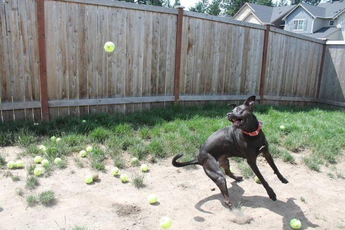 Три собаки, 60 теннисных мячей и пингвинчики— забавные фотографии
