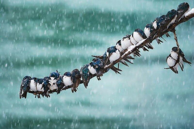 Интересные фотографии о том, как греют друг друга разные птицы в холода