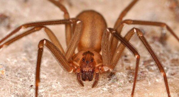 Самые ядовитые пауки: vova_91 — LiveJournal