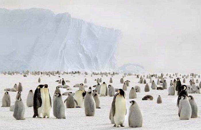Чудесный антарктический холод Джоан Майерс
