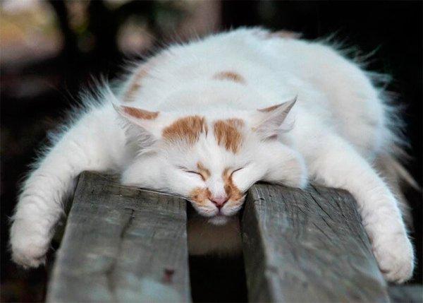 Спящие коты (21 фото)