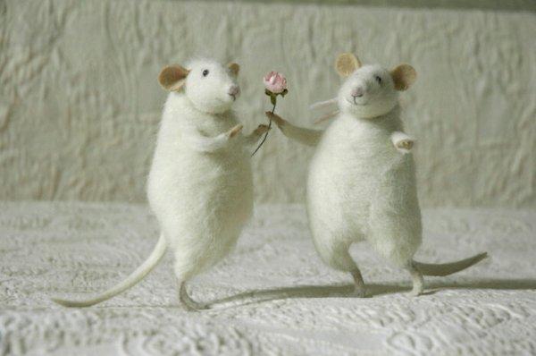 """Изумительные """"кошки-мышки"""" (29 фото)"""