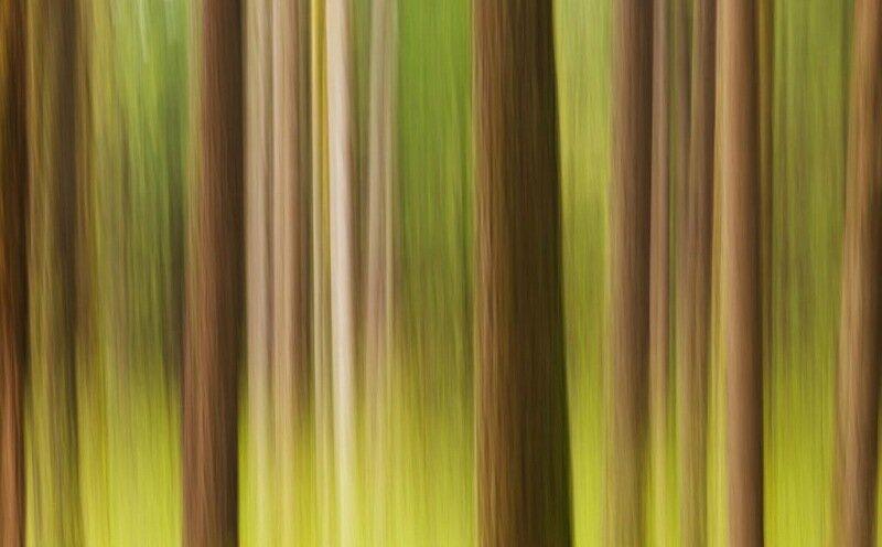Абстрактные узоры, созданные самой природой (Фото Thorsten Scheuermann)