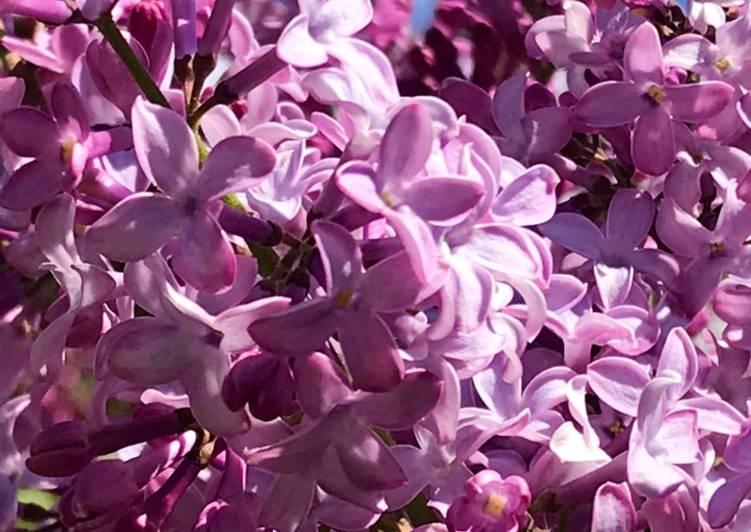 Lavender Vanilla cake