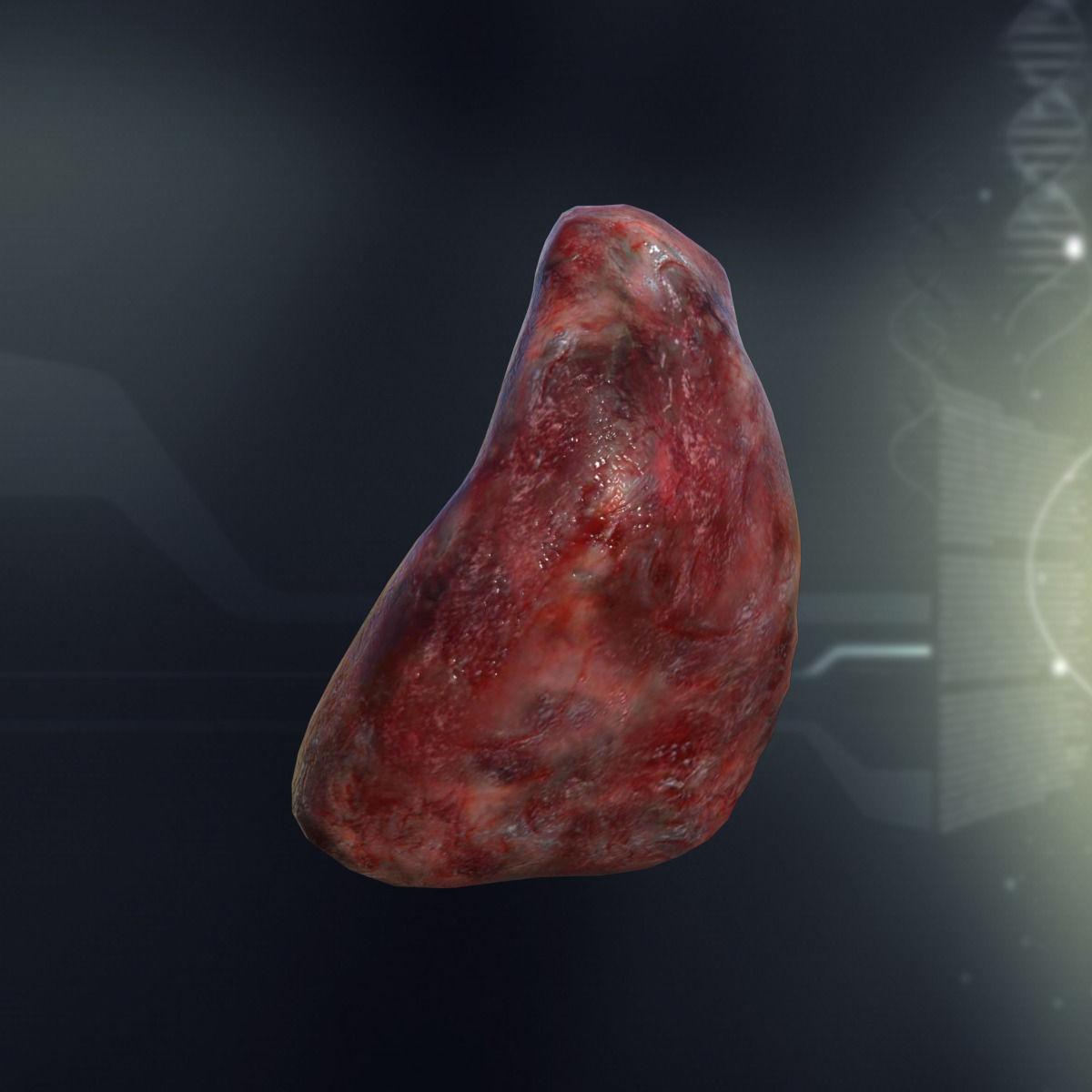 Human Spleen Anatomy 3d Model Game Ready X Obj 3ds Fbx C4d Lwo Lw Lws