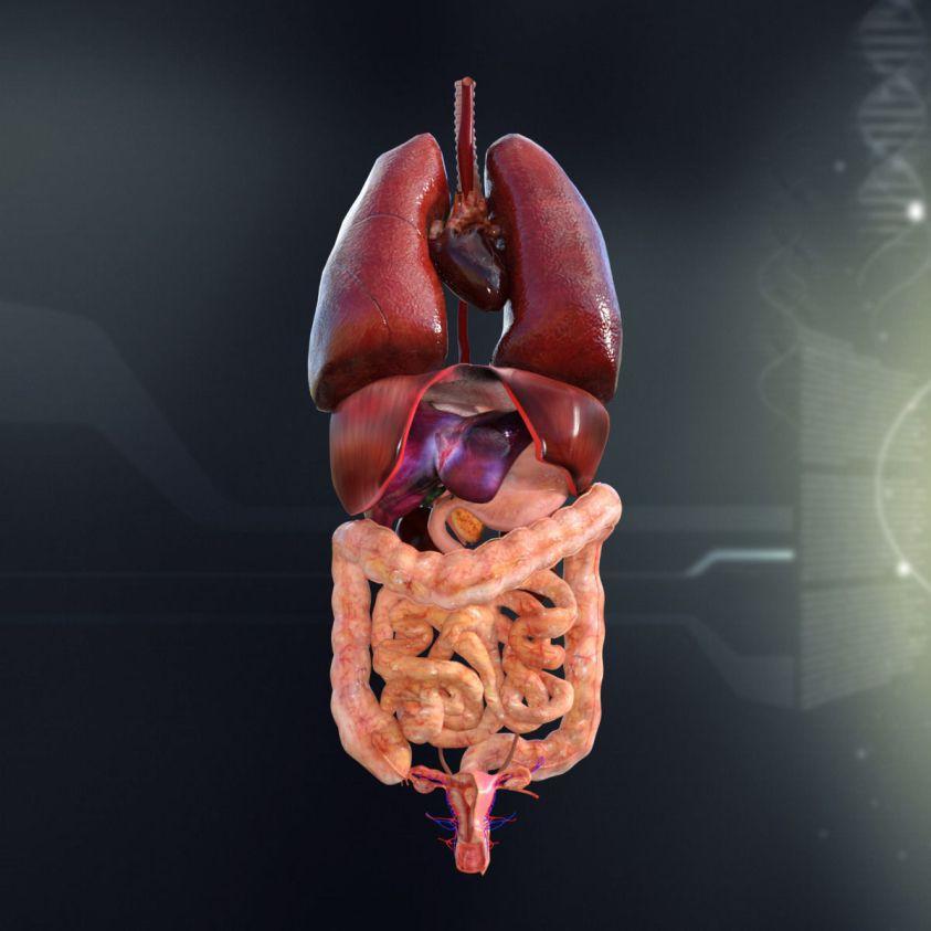 Diagram Internal Female Anatomy : Anatomy Of The Back ...