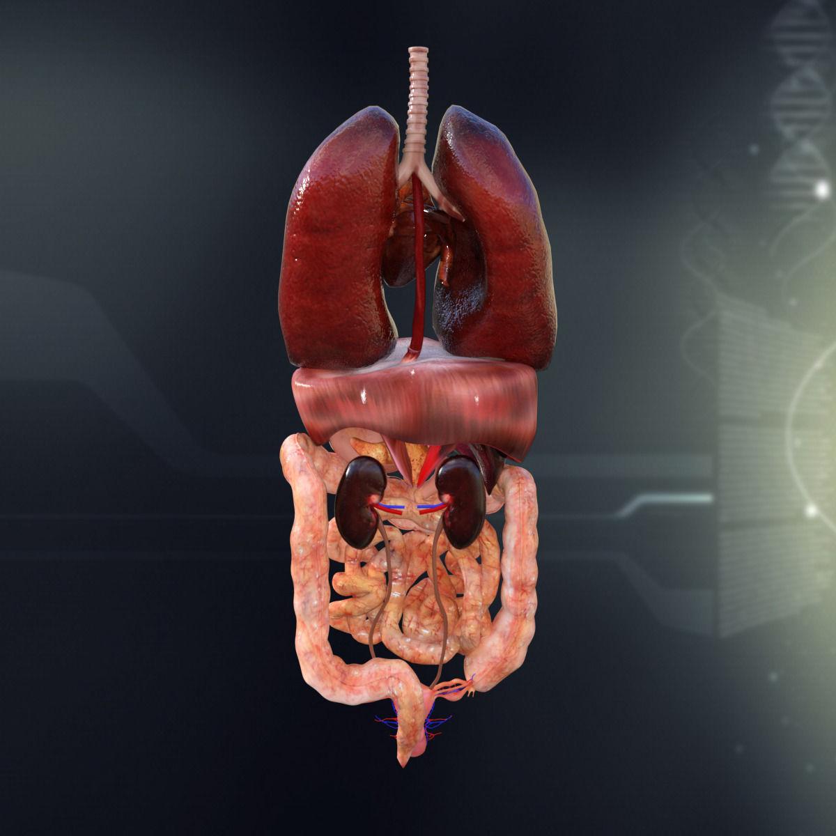 interior female body parts diagram » Electronic Wallpaper ...