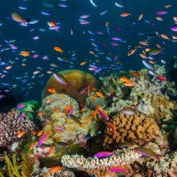 Australia stopped the Great Barrier Reef being listed as 'in danger' – what happens next?; ABC