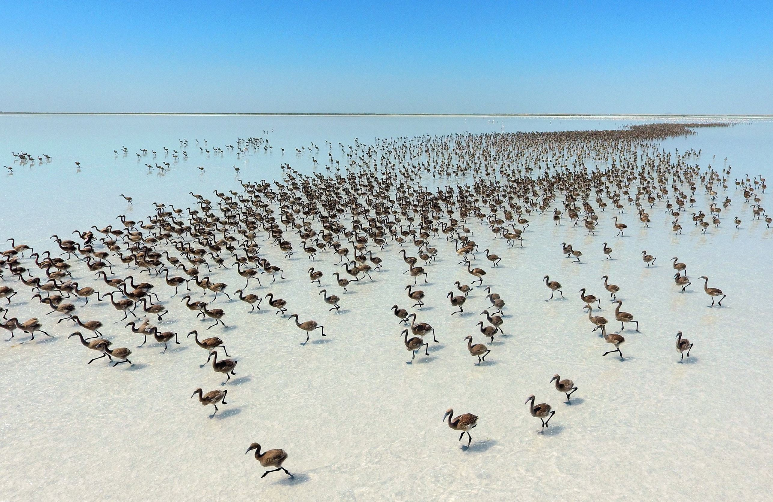 Слайд 27 из 67: AKSARAY, TURKEY - JUNE 28: Flamingos are seen after thousands of flamingo chicks have emerged from their nests at Salt Lake, which is home to the biggest flamingo colony in Turkey and the Mediterranean basin, in Aksaray, Turkey on June 28, 2016.  (Photo