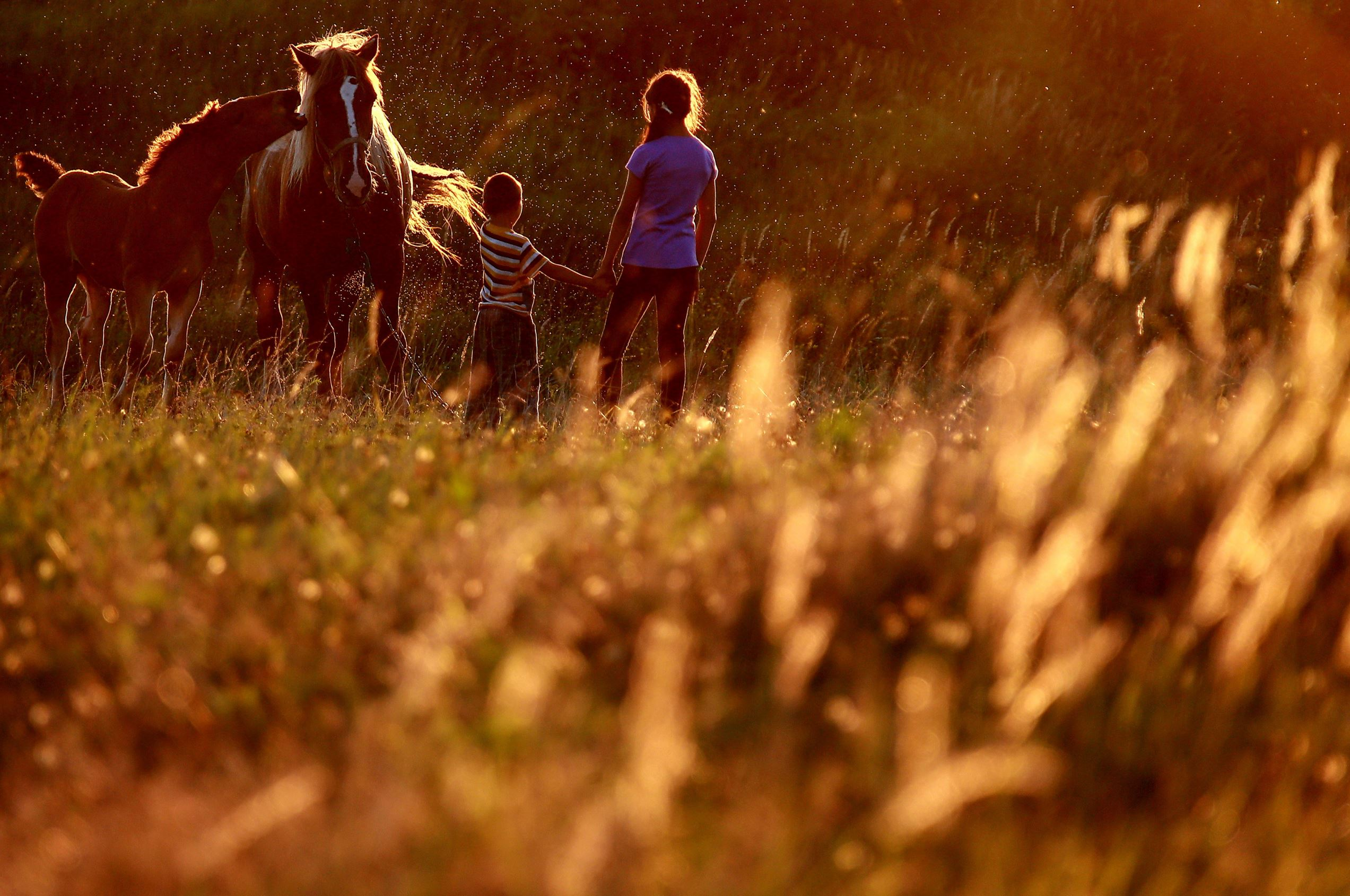 Слайд 73 из 86: KOSTROMA REGION, RUSSIA  AUGUST 16, 2016: Children with a horse in a field near the village of Lobanovo. Vladimir Smirnov/TASS (Photo by Vladimir Smirnov\TASS via Getty Images)