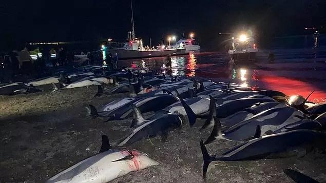 """""""Faroe Adaları""""nda 1.400 Yunus Bıçaklanarak Öldürüldü"""