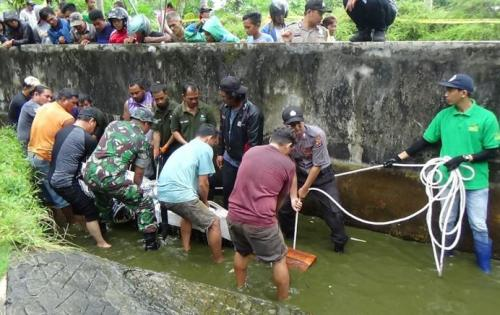 Evakuasi Buaya Minahasa
