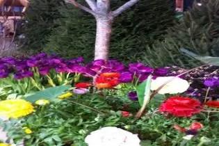indiana flower patio show mar 2022