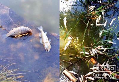 В Кривом Роге всплыла «пузом кверху» рыба в реке | Первый ...