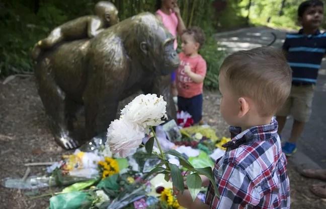Un petit garçon dépose des fleurs au pied d'une statue de gorille au zoo de Cincinnati.