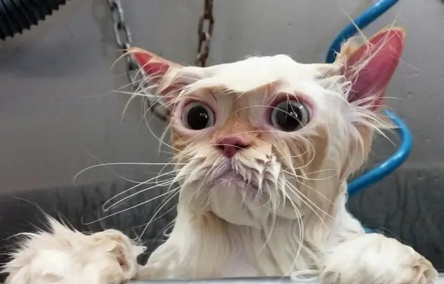 L'utilisatrice de Reddit, PaulaJaAnderson a posté cette photo de chat