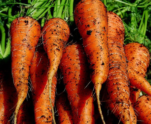 Image result for FRESH CARROTS