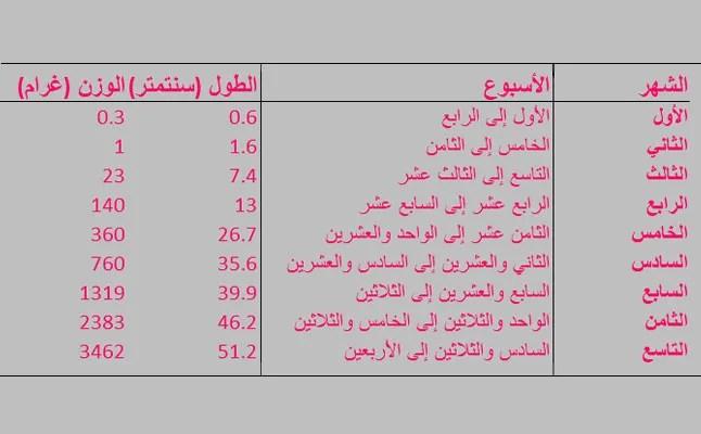 جدول بطول ووزن الجنين شهر بشهر 3a2ilati