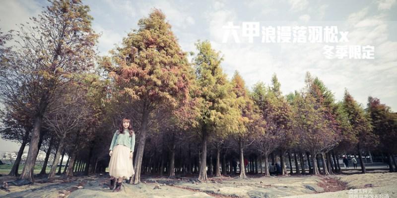 【台南秘境】秋冬紅翻了的拍照景點,台南六甲林鳳營的落羽松
