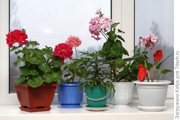 Комнатные растения выбираем варианты для окон северного