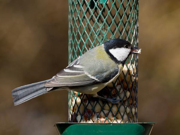 Кормушка для птиц из металлической сетки