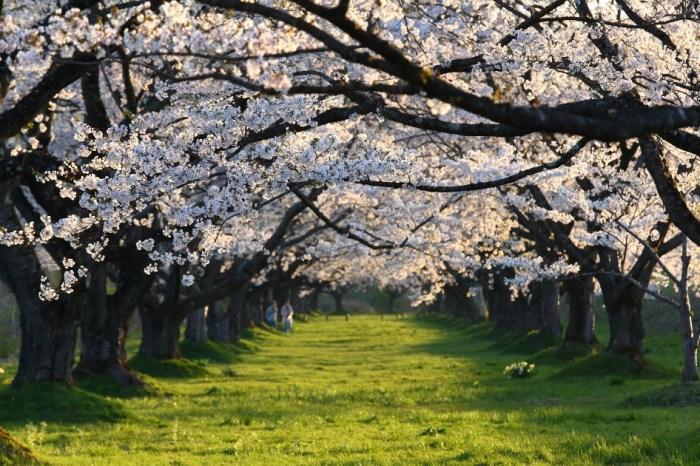 [旅遊] 日本東北未來的旅遊模式「深度微旅」
