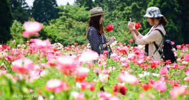 日本。大分 久住花公園 超療癒薰衣草.罌粟花海・現打花草冰淇淋