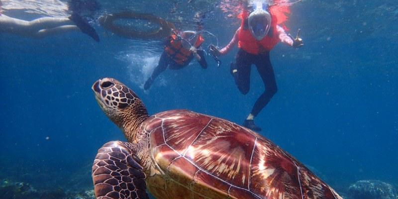 菲律賓.APO島 阿波島看海龜 體驗被海龜環繞的滋味