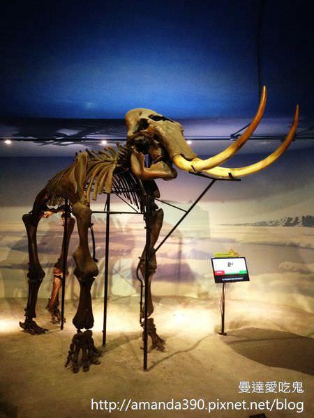 【台南景點】新市區 樹谷生活科學館 ● 近距離化石好吸睛 ● 懷舊餐廳吃到撐!!  ❤❤