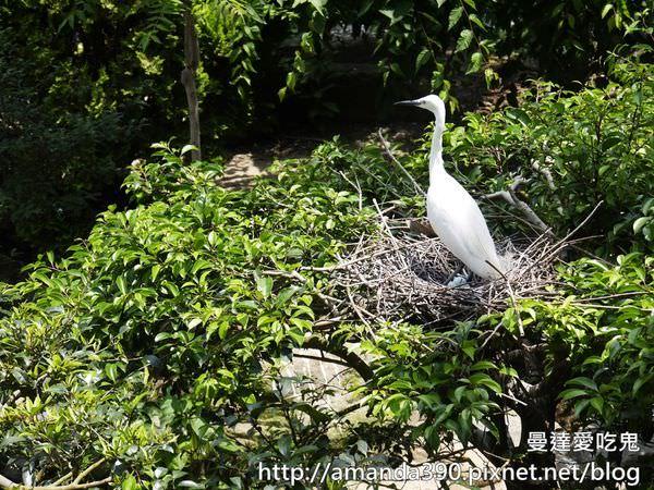 【大阪景點】天王寺動物園。100週年紀念。憑大阪周遊卡免費入園參觀|親子景點|親子旅遊