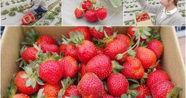 [高雄草莓園]松田觀光果園-不出高雄市區也能採草莓!草莓不大但香甜~