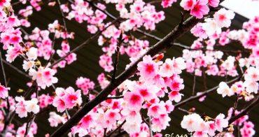 台北市區裡的粉紅佳人 ~[忠孝東路四段] VS 貴鬆鬆的福隆便當