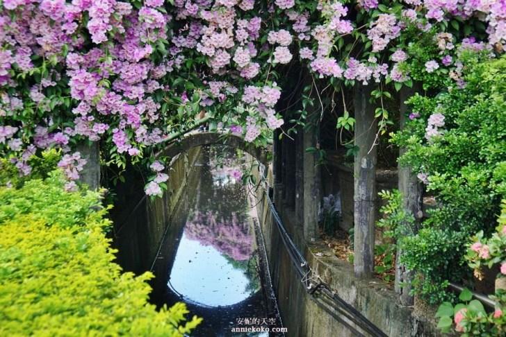 20191018164222 71 - [泰山秘境 蒜香藤花海 ]百尺紫色瀑布超夢幻  花期僅有一周 想拍趁現在
