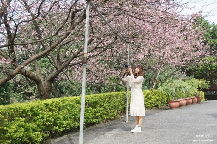 20200125230134 22 - [台北賞櫻景點]淡水天元宮 粉紅三色櫻渲染山城 雄偉天元宮與櫻花的溫柔對話