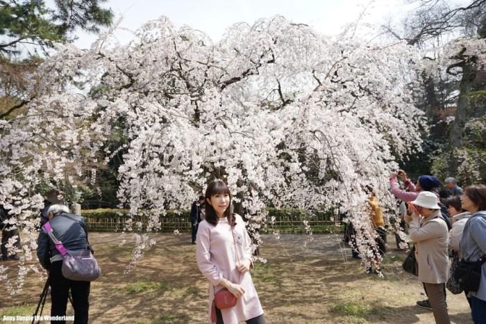 【京阪自由行】京都賞櫻必去的京都景點 ♥ 京都御苑櫻花真的好美